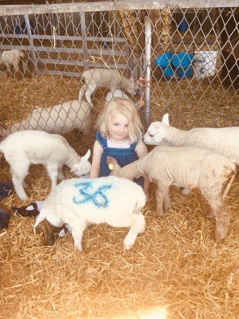 Michelmersh Manor Farm Alexa with lambs