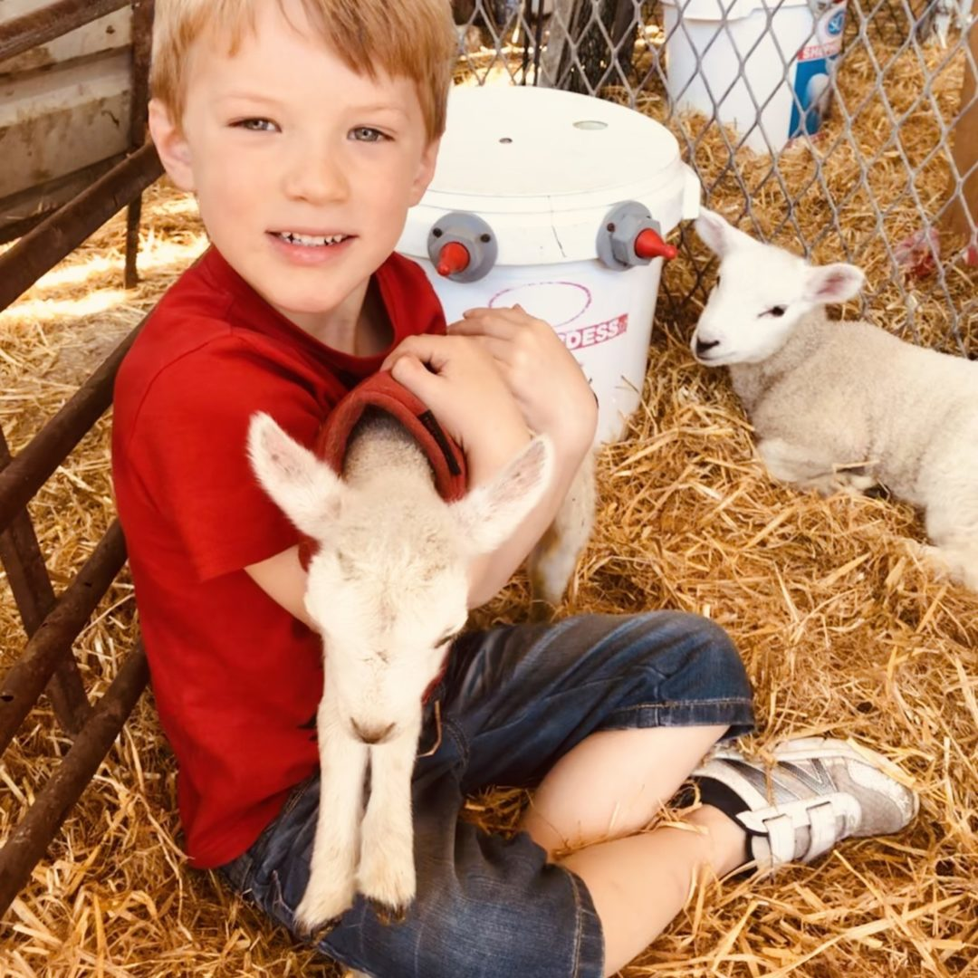 Michelmersh Manor Farm Louis and lamb