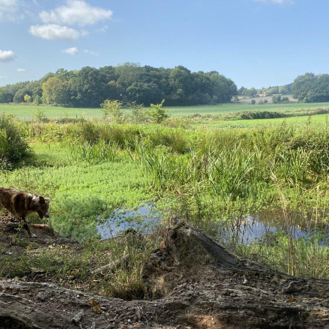 Pond and Evie